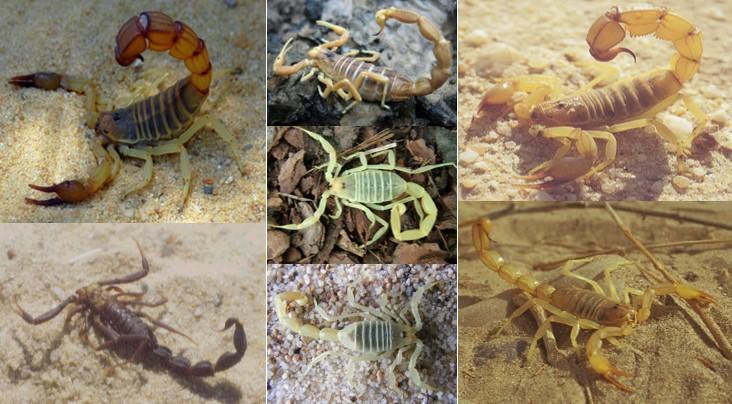 Compilation de photos (sourcedes photos: S Nouira:Exposé sur la biodiversité de la faune terrestre tunisienne/ 2emecongres franco-maghrebin de zoologie et 4emesjournees franco-tunisiennes de zoologie)