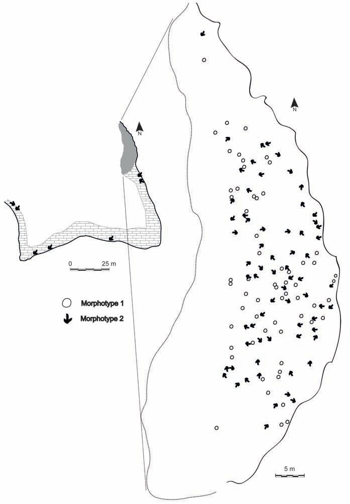 Carte du champ de la surface de la piste